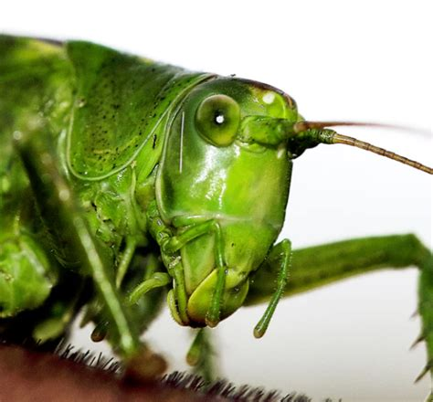 Can Pet Crickets Improve the Well-being of the Elderly