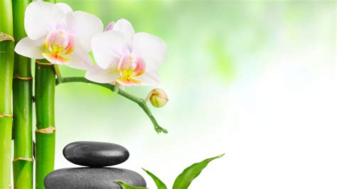 Spa Orchids Wallpapers - Top Free Spa Orchids Backgrounds