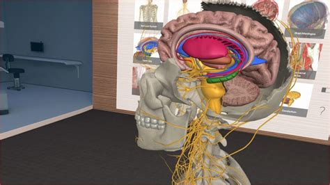Learn What Makes Up the Human Body in 3D Organon VR