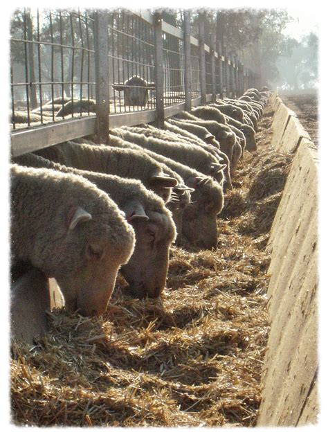 Intensive feeding systems — AgriPartner Consulting