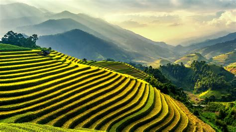 Rice Terraces · Free Stock Photo