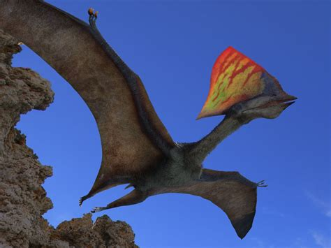 Build a Pterosaur | National Geographic Society